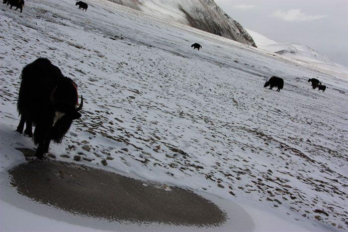 Ruta por los mejores lugares del Tíbet