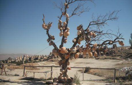 Árbol con tinajas en Goereme en la Capadocia, Turquía