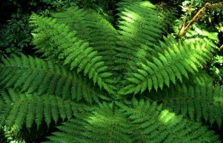 Bonita planta encontrada en el trekking Chasm Walk en Nueva Zelanda