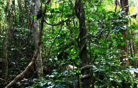 Bosque Fitzroy Island