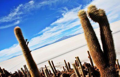 Isla de cactus en medio del Salar de Uyuni