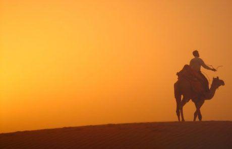 Camello al atardecer en el desierto de Jaisalmer