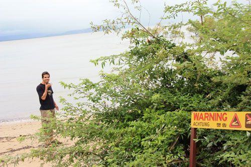 Cocodrilos en playas de Cape Tripulation