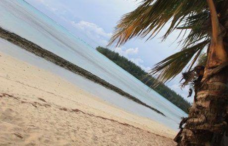 Cocos en las playas de Moorea