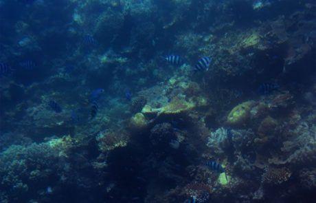 Corales de la Gran Barrera de Coral