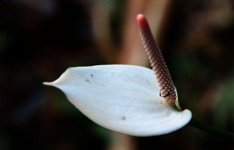 Bonita flor blanca en los jardines botánicos de Sidney
