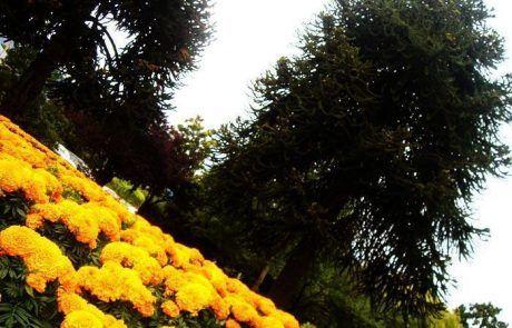Jardín botánico de Queenstown en Nueva Zelanda