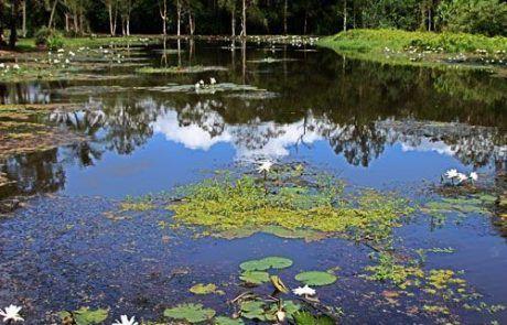 Jardines botánicos de Sidney