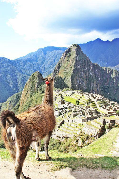 Llama mirando a la ciudad de Machu Picchu en Perú