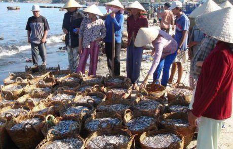 Mercado de pescado en Mui Né