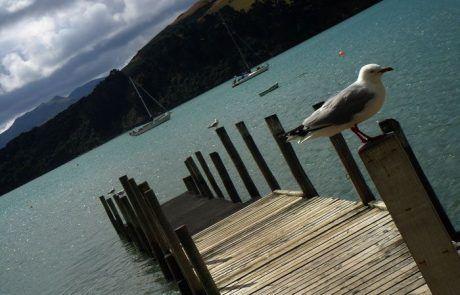 Muelle de Christchurch, Nueva Zelanda