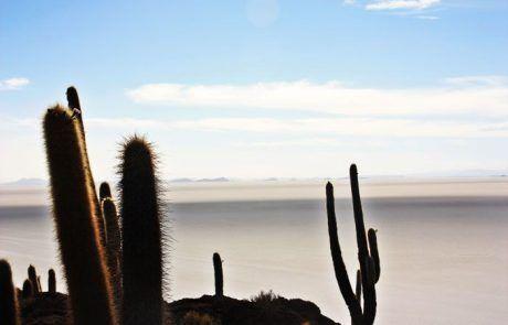 Oasis de cactus en el Salar de Uyuni