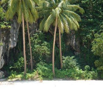 Palmeras en playa paradisíaca en el Nido