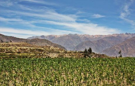 Panorámica del cañón del Colca en Perú