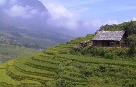 Panorámica de las terrazas de arroz en Sapa