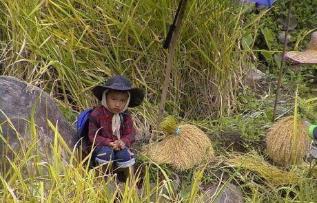Mirada tierna de niño filipino en terraza de arroz de Banaue