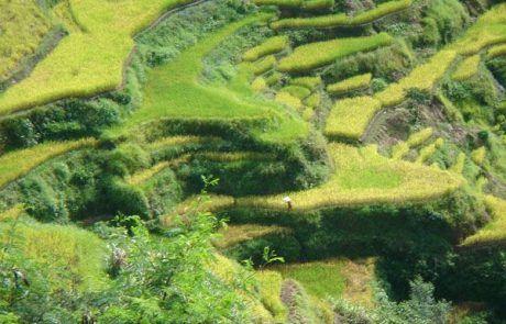 Espectacular paisaje de terrazas de arroz en Filipinas
