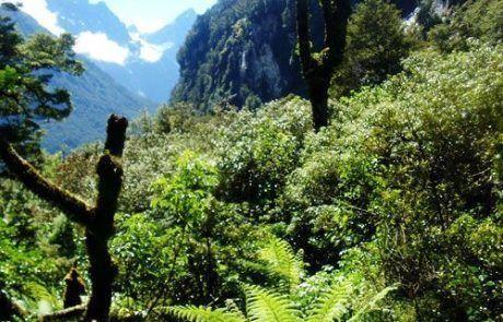 Trekking Chasm Walk en Nueva Zelanda