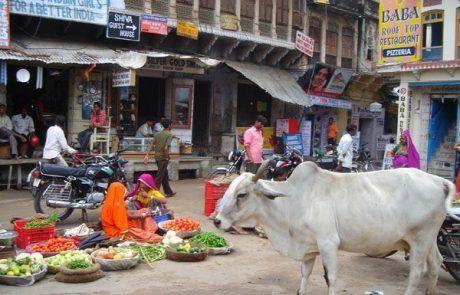 Vaca en un mercado callejero de Nueva Delhi