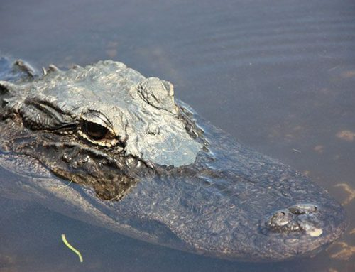 Ruta de un día por los Everglades