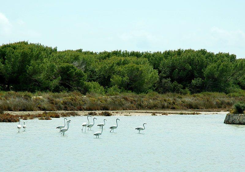 Parque Natural Ses Salines