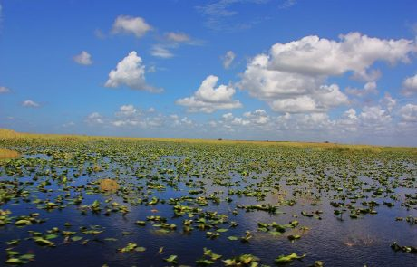 Panorámica de los Everglades